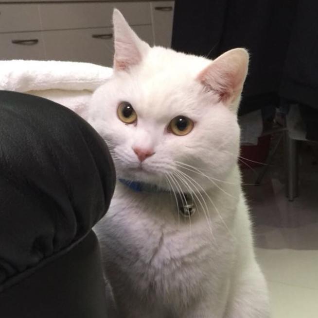 可爱猫咪蓝光照片
